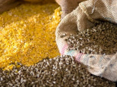 Jakie wsparcie dla rolników stosujących pasze non-GMO?