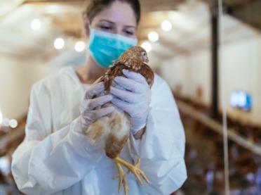 MRiRW o przenoszeniu się wirusa ptasiej grypy na człowieka