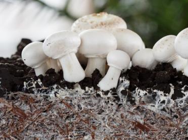 Uprawa grzybów? Tak - własna i ekologiczna