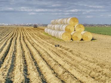 Jakie herbicydy dla ziemniaków przed wschodami?