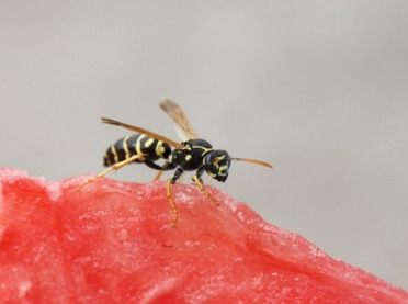 Ukąszenia pszczół, os i szerszeni – co warto wiedzieć?