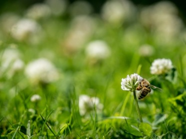 Apel o niekoszenie trawników