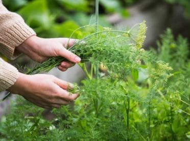 Wykaz producentów ekologicznych już dostępny
