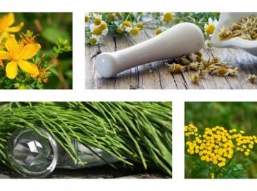 Czerwcowe ziołobranie - te rośliny mają uzdrawiającą moc!
