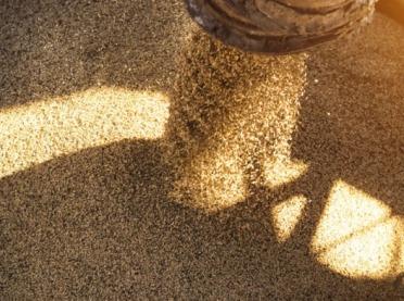 COBORU przyznało hodowcom wyłączne prawo do 64 odmian roślin