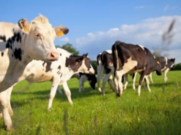 Dobrostan zwierząt - weź udział w konsultacjach!