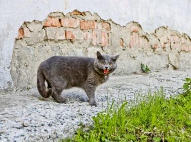 GLW potwierdza pierwszy przypadek wścieklizny u zwierzęcia domowego
