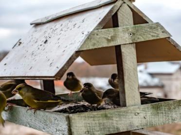 Dokarmianie ptaków zimą - co warto wiedzieć?
