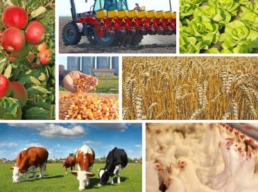 Inwestować w rolnictwie z głową