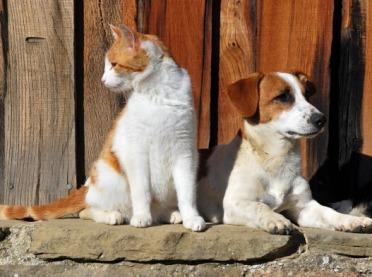 Tam gdzie są psy i koty - jest mniej szczurów