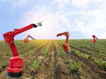 Robotyka w rolnictwie? To już się dzieje! Niesamowita wizja realnej przyszłości
