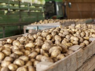 Choroby przechowalnicze ziemniaków