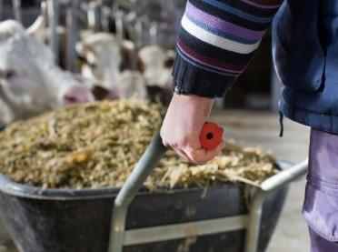Drożdżowe dodatki paszowe u zwierząt hodowlanych