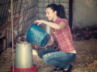 Karmidła dla drobiu – gdzie montować, jakie rodzaje?