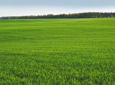 Prawidłowe skracanie zbóż - opis kolejnych etapów