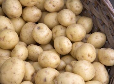 Jak odróżnić ziemniaki wczesne od młodych?
