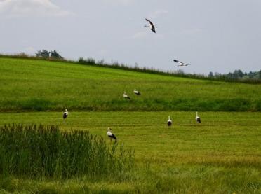 Wiosenna renowacja łąk - jaki sposób wybrać?