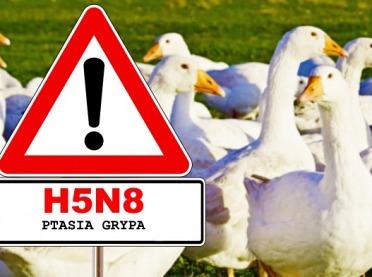 Ptasia grypa u drobiu – nowe opinie naukowe i aktualna sytuacja epidemiologiczna w Europie