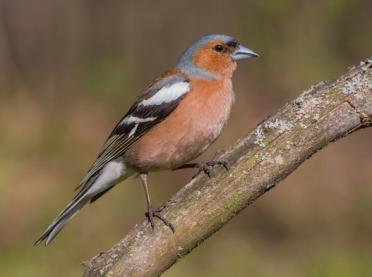 Kilka słów o zimujących w Polsce ptakach