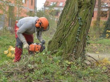 Wycinka drzew w świetle przepisów prawnych