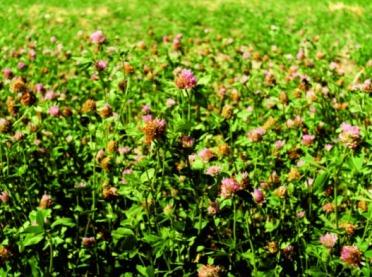 Bobowate drobnonasienne popularne i mniej znane