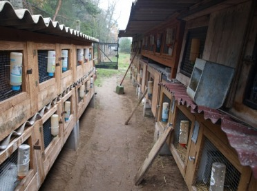 Porządki na fermie królików