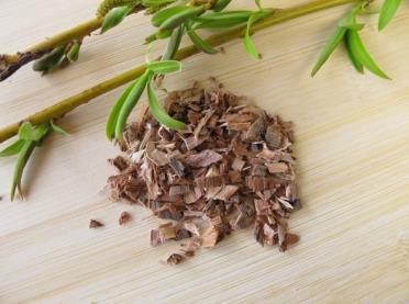 Kora wierzby - naturalna aspiryna