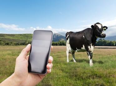 Zarządzanie stadem przy pomocy smartfona - czy to możliwe?