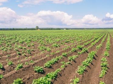"""""""Innowacje w ziemniakach"""" - rozmowa z dr. W. Nowackim"""