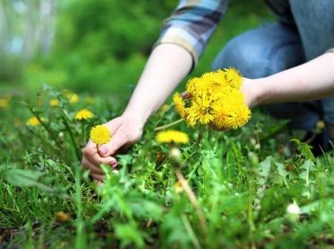 Zbieramy wiosenne zioła - poradnik dla początkujących