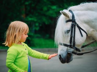 Zooterapia - o zwierzętach dla zdrowia