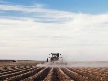 Wiosenna wojna zchwastami w ziemniakach