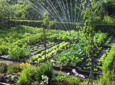 Zakładamy ogródek warzywny - praktyczne porady