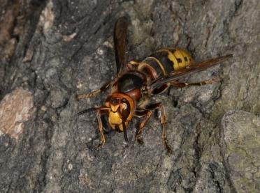 Które owady mogą być dla nas niebezpieczne?