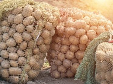 Kalkulacje rolnicze - ziemniaki jadalne