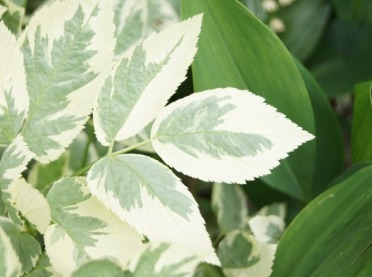 Rośliny, które odstraszą komary - musisz mieć je w swoim ogrodzie