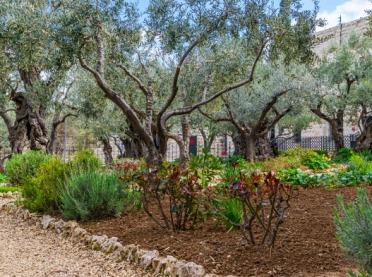 Ogrody i rośliny biblijne