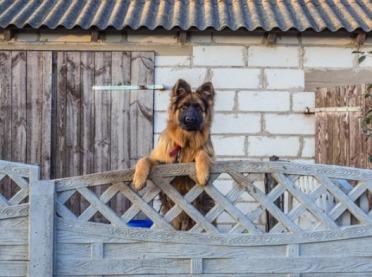 """Pies nie tylko do budy - """"praca psa w gospodarstwie"""""""