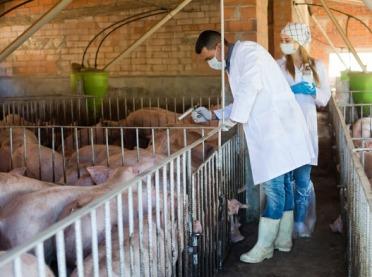 ASF - zasady czyszczenia środkami dezynfekcyjnymi