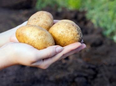 Ziemniak – najtańszy kosmetyk dla oczu