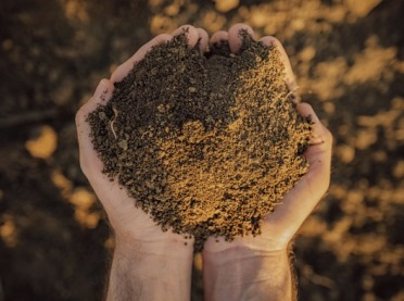 Niedobory magnezu w glebach a skutki zdrowotne dla ludzi