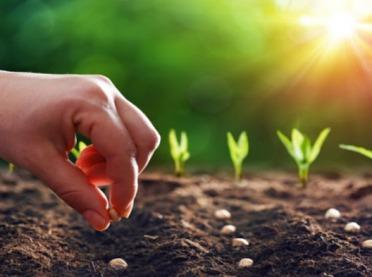 Jak wybrać nasiona do upraw ekologicznych?