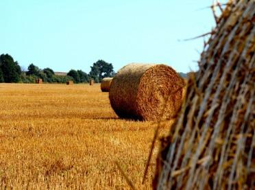 Siatka rolnicza czy sznurek?
