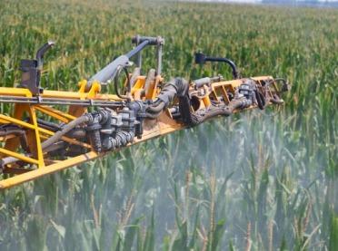 Wymagająca kolba - jak nawozić kukurydzę?