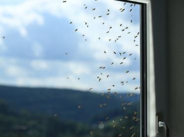 Jak pozbyć się owadów z domu? Sprawdzone sposoby!