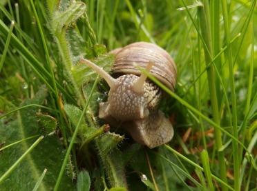 Dochodowa hodowla ślimaków winniczków