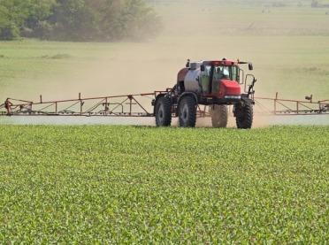 Jak zwalczać chwasty w kukurydzy?