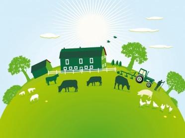 Jak uchronić się przed epidemią E. coli w gospodarstwie?