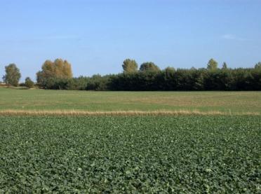 Jesienna ochrona rzepaku