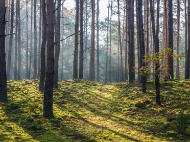 Warte odwiedzenia... Kampinowski Park Narodowy